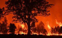 Bickering Over Australian Bushfires
